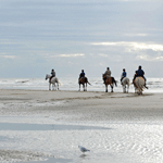 BALADE A CHEVAL DEAUVILLE