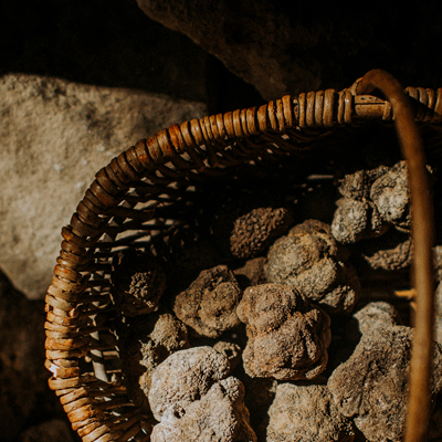 l'art de la truffe