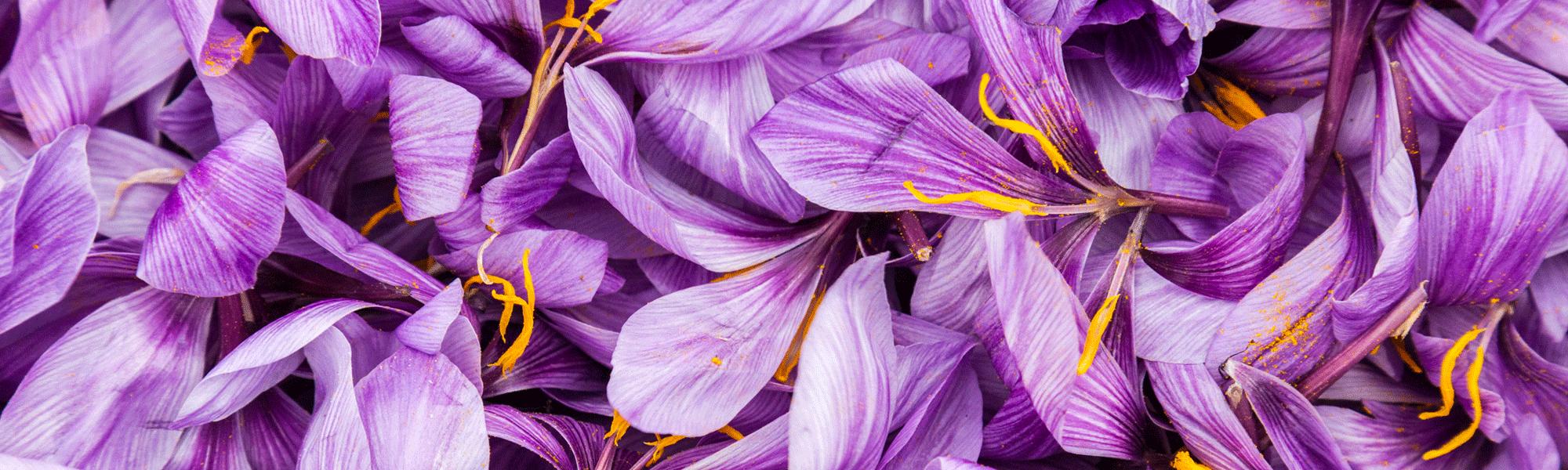 fleurs de crocus sativus safran toit de paris