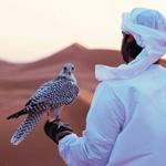 faucon dubai desert