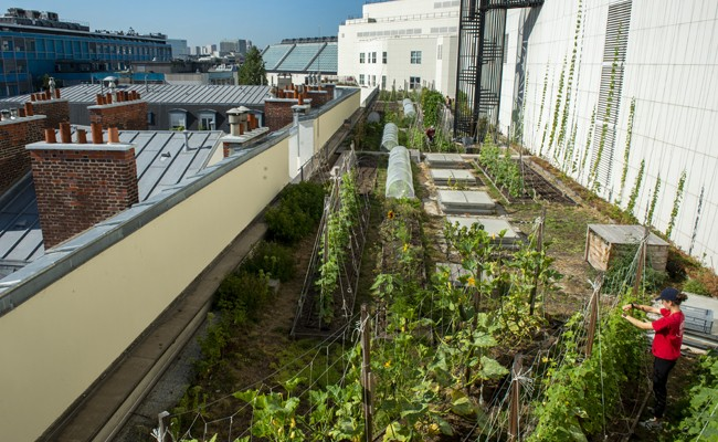 THE VEGETABLE GARDEN ON THE ROOF OF THE OPERA BASTILLE